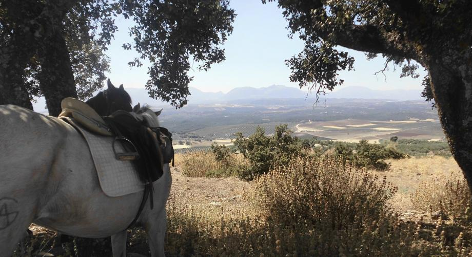 Trail Riding, Sierra de Campo Agro - Cortijo Las Minas