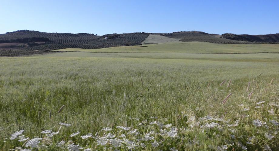 Campo abierto para rutas a caballo - Cortijo Las Minas
