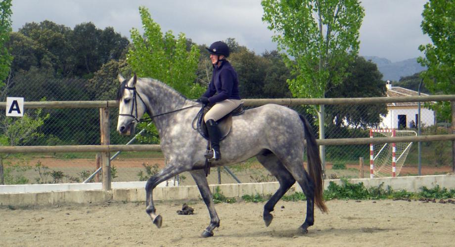 Clases Equitación para Adultos- Cortijo Las Minas